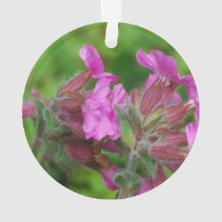 Pink Catchfly Flowers