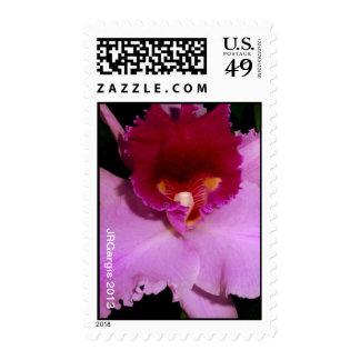 Pink Cattleya Orchid Vertical Stamp