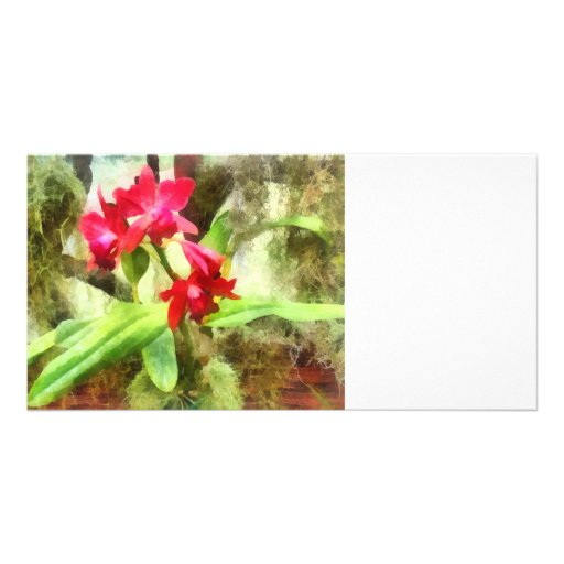 Pink Cattleya Orchids Photo Card Template