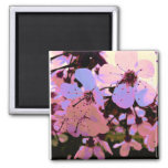 Pink Cherry Blossom 2 Inch Square Magnet