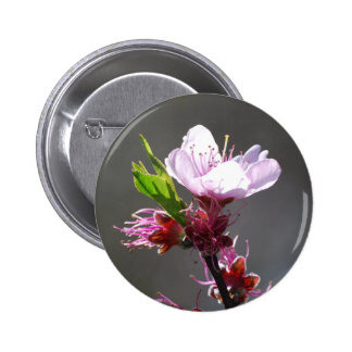 Pink Cherry Blossom button