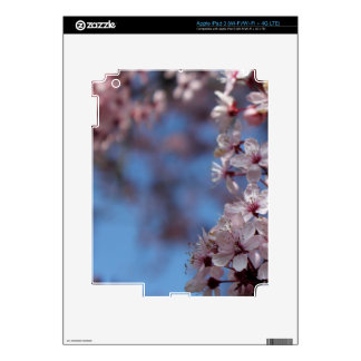 pink cherry blossom in blue sky iPad 3 decals