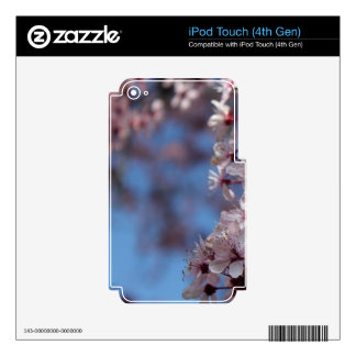 pink cherry blossom in blue sky skins for iPod touch 4G