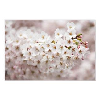 Pink Cherry Blossom Photo Art