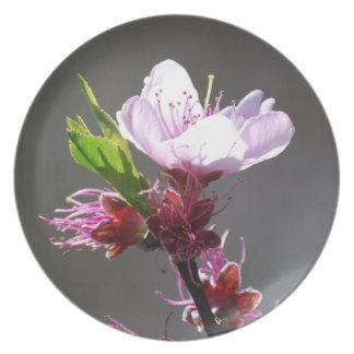 Pink Cherry Blossom Dinner Plate