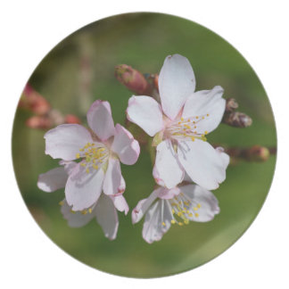 Pink cherry blossom plate
