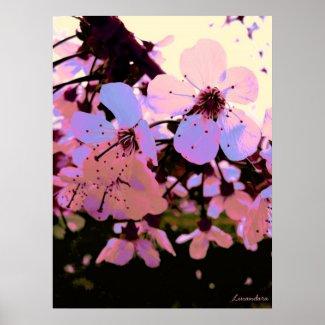 Pink Cherry Blossom print
