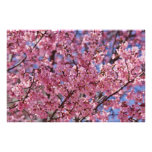 Pink Cherry Blossom Sky Poster