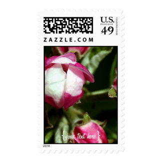Pink Cherry Blossom Stamps