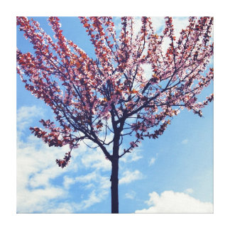Pink Cherry Blossom Tree Canvas Print