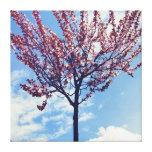 Pink Cherry Blossom Tree Stretched Canvas Prints