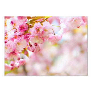 Pink cherry blossoms background card