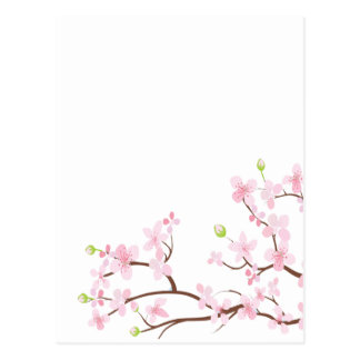 Pink Cherry Blossoms Blank Postcard
