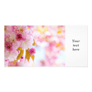 Pink cherry blossoms in spring orchard photo cards