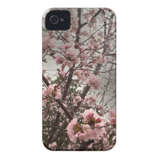 Pink Cherry Blossoms iPhone 4 4s Case