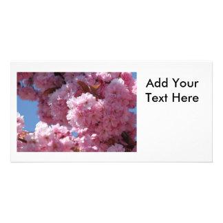 Pink Cherry Blossoms Custom Photo Card