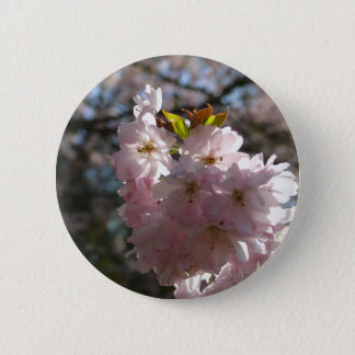Pink cherry blossoms pinback button