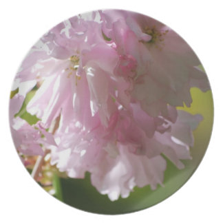 Pink Cherry Blossoms Plate