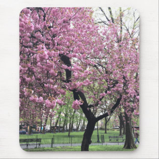 Pink Cherry Tree Blossoms Springtime New York City Mouse Pad