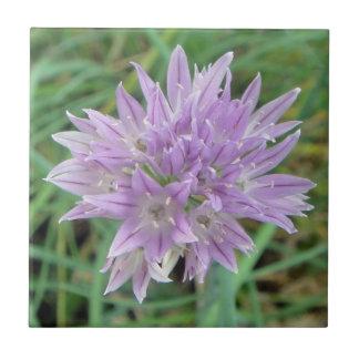 Pink Chive Flowers Allium Schoenoprasum Ceramic Tile