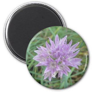 Pink Chive Flowers Allium Schoenoprasum Magnet