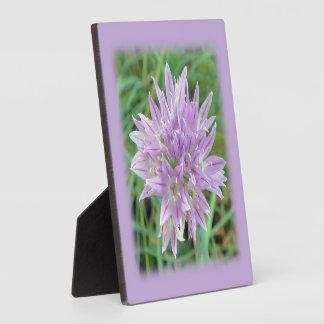 Pink Chive Flowers Allium Schoenoprasum Plaque