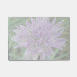 Pink Chive Flowers Allium Schoenoprasum Post-it Notes
