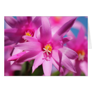 Pink Christmas Cactus Schlumbergera Flower Blossom Greeting Card
