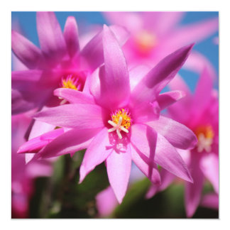 Pink Christmas Cactus Schlumbergera Flower Blossom 5.25x5.25 Square Paper Invitation Card