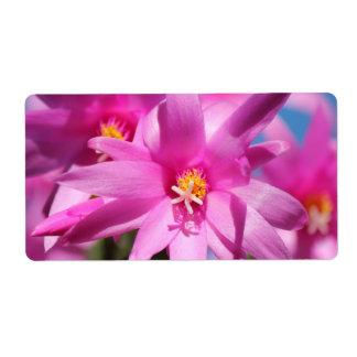 Pink Christmas Cactus Schlumbergera Flower Blossom Label