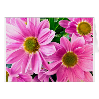 Pink chrysanthemum card