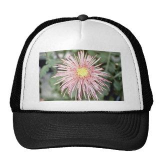Pink Chrysanthemum 'Type Araigneefilament' (Floris Mesh Hat