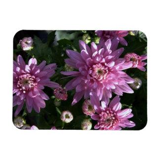 Pink Chrysanthemums Rectangular Magnets