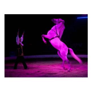 Pink Circus Horse Postcard