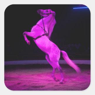 Pink Circus Horse Square Sticker