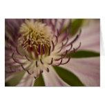 Pink Clematis • Greeting Card