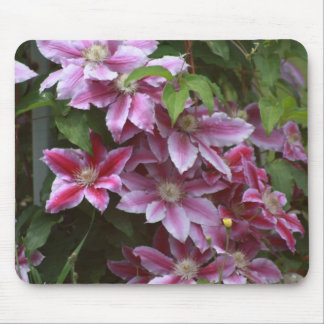 Pink Clematis Mouse Pad