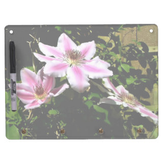 Pink clematis with various shades of Pink Dry-Erase Boards