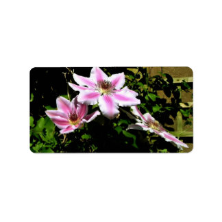 Pink clematis with various shades of Pink Personalized Address Label