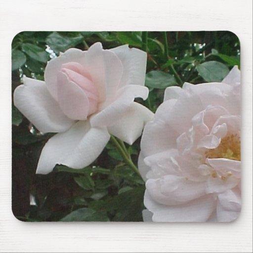Pink Climbing Rose Mouse Pad