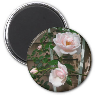 Pink climbing Roses 2 Inch Round Magnet