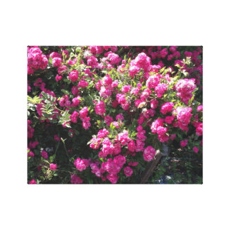 Pink Climbing Roses Canvas Print