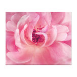 Pink Cloud Garden Rose Bokeh Background Template Canvas Print