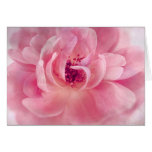 Pink Cloud Garden Rose Bokeh Background Template Stationery Note Card