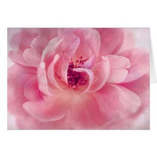 Pink Cloud Garden Rose Bokeh Background Template Cards