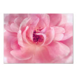 "Pink Cloud Garden Rose Bokeh Background Template 4.5"" X 6.25"" Invitation Card"
