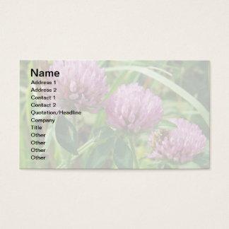 Pink Clover Wildflower - Trifolium pratense Business Card