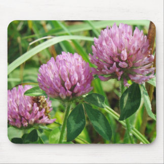Pink Clover Wildflower - Trifolium pratense Mouse Pad