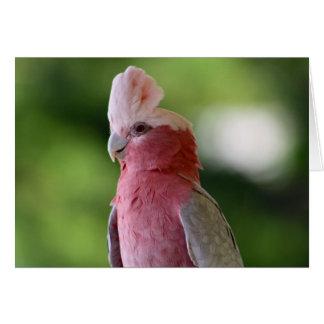 Pink Cockatoo Card
