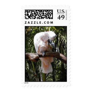 Pink Cockatoo Postage Stamps Postage Stamp